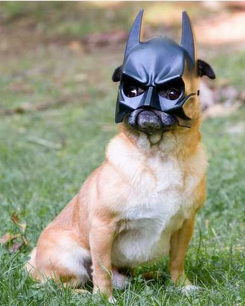 Batdog - Batman's Best Friend